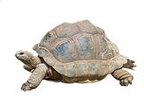 turtle-2815539_1920.png