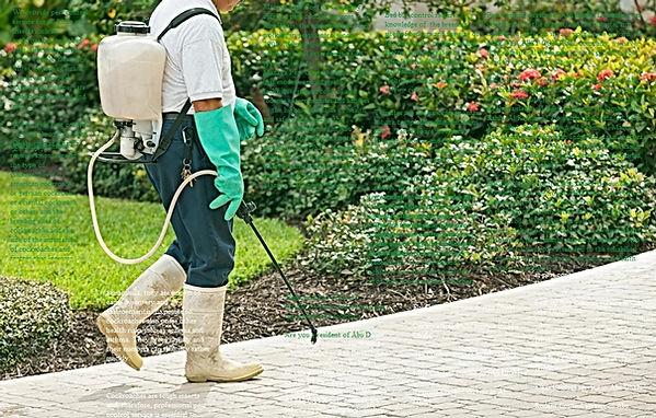 pest control service | MAZAYA PEST CONTROL | best pest control service