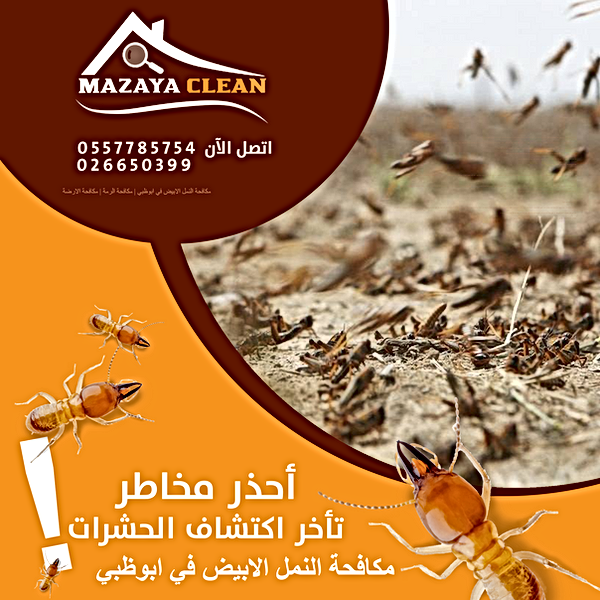 مكافحة النمل الابيض في ابوظبي | MAZAYA PEST CONTROL | مكافحة الرمة في ابوظبي