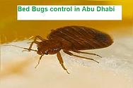 bed bug control in Abu Dhabi | bed bug p