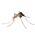 مكافحة البعوض في ابوظبي   MAZAYA PEST CONTROL   شركة مكافحة البعوض