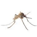 مكافحة البعوض في ابوظبي | MAZAYA PEST CONTROL | شركة مكافحة البعوض