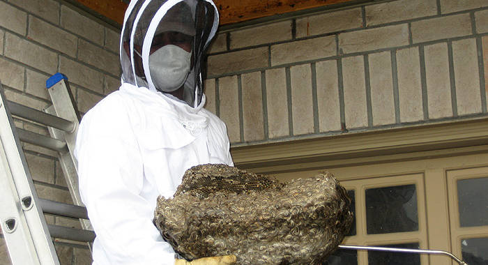 MAZAYA PEST CONTROL , pest control in Abu Dhabi , pest controller
