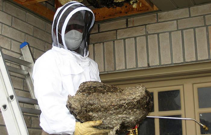مزايا لمكافحة الحشرات في ابوظبي , مكافحة الحشرات والقوارض , ازالة خلايا النحل وابادة الدبابير