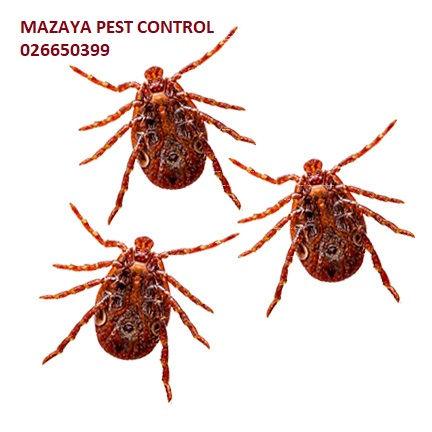 mites control in Abu Dhabi | MAZAYA PEST CONTROL