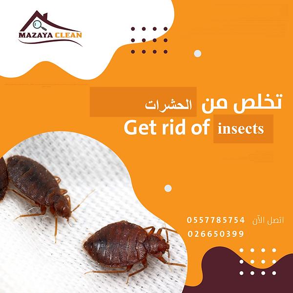 مكافحة الحشرات في الشهامة | MAZAYA PEST CONTROL | شركة مكافحة حشرات في الشهامة
