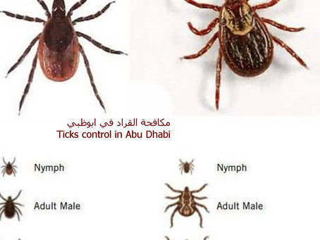Ticks pest control - Ticks control - ticks spray