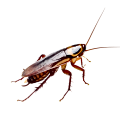 cockroach control Abu Dhabi