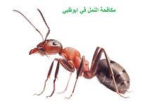مكافحة النمل في ابوظبي| مكافحة الحشرات.