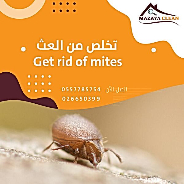 mites control in Abu Dhabi   MAZAYA PEST CONTROL