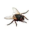 flies , flies control , fly control, fli