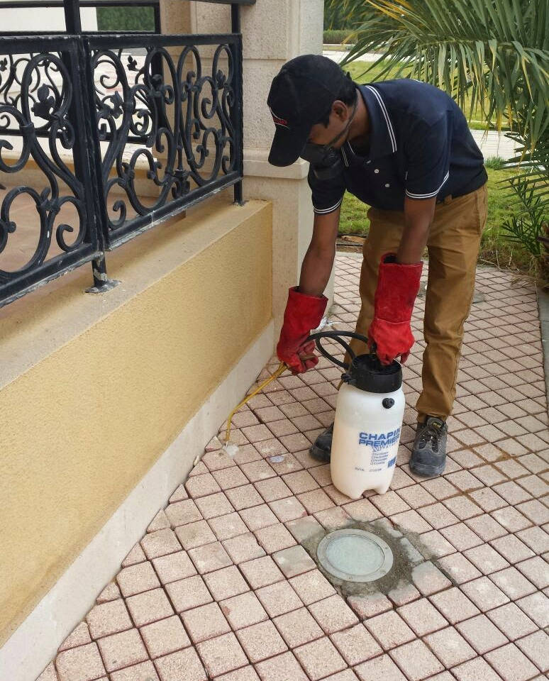 pest control in Abu Dhabi , MAZAYA pest control , pest control service