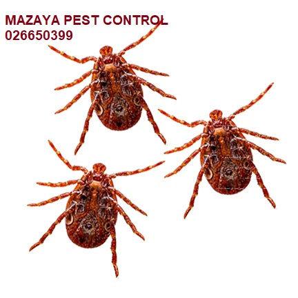 مكافحة الفاش في ابوظبي | MAZAYA PEST CONTROL | مكافحة العث في ابوظبي