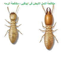 مكافحة النمل الابيض | مكافحة الرمه في ابوظبي