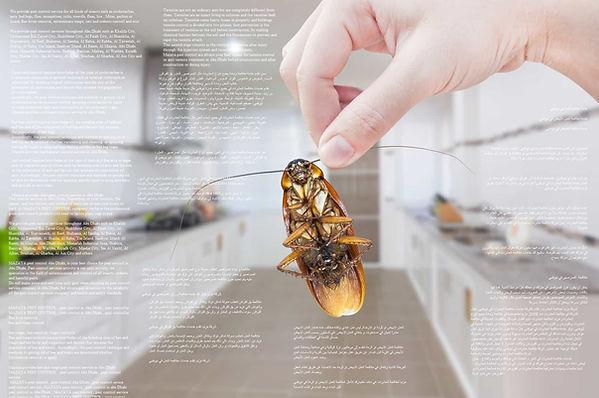 مكافحة الحشرات في العين | MAZAYA PEST CONTROL | افضل شركة مكافحة حشرات في العين