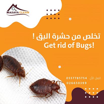 مكافحة بق الفراش في ابوظبي | MAZAYA PEST CONTROL | التخلص من بق الفراش