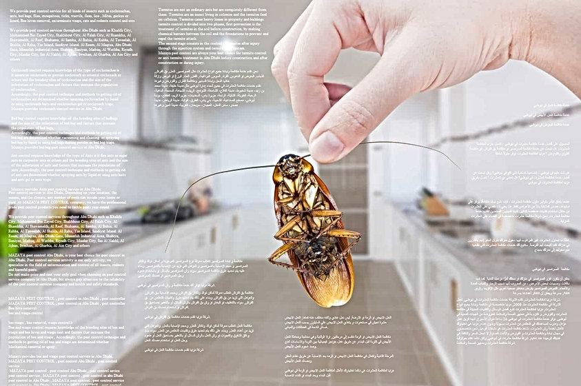 مكافحة الحشرات في ابوظبي   MAZAYA PEST CONTROL   شركة مكافحة حشرات