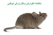 مكافحة القوارض والفئران في ابوظبي | مكافحة الحشرات في ابوظبي