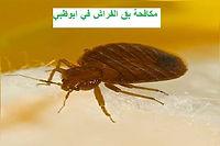 مكافحة بق الفراش في ابوظبي | مكافحة الحشرات في ابوظبي