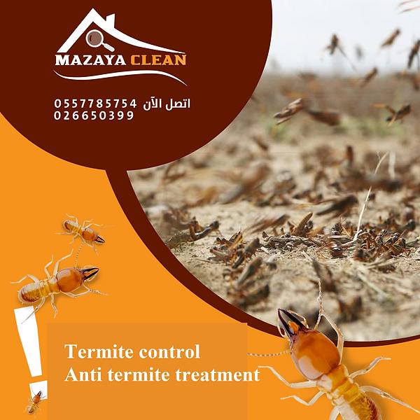 Termite control in Abu Dhabi - Anti Term