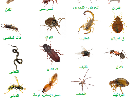 ما هو افضل مبيد لمكافحة الحشرات ؟ | مكافحة الحشرات في ابوظبي