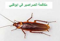مكافحة الصراصير في ابوظبي | مكافحة الحشرات