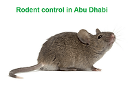Rodent control in Abu Dhabi | rat control