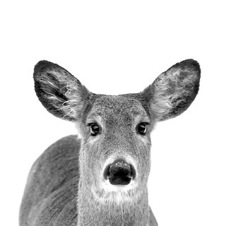 LeahMcDonald2019_9_deer.jpg