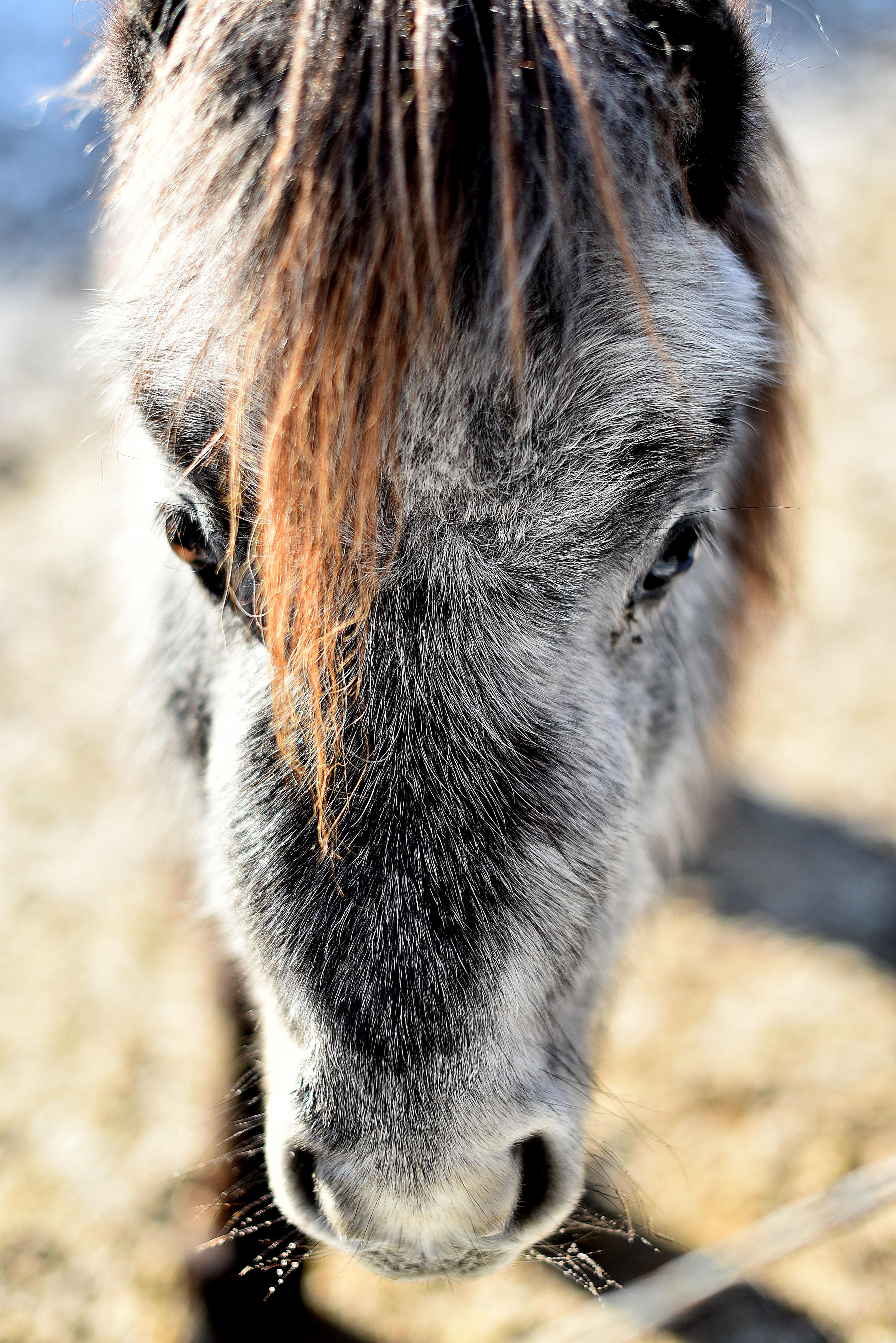Pferd München