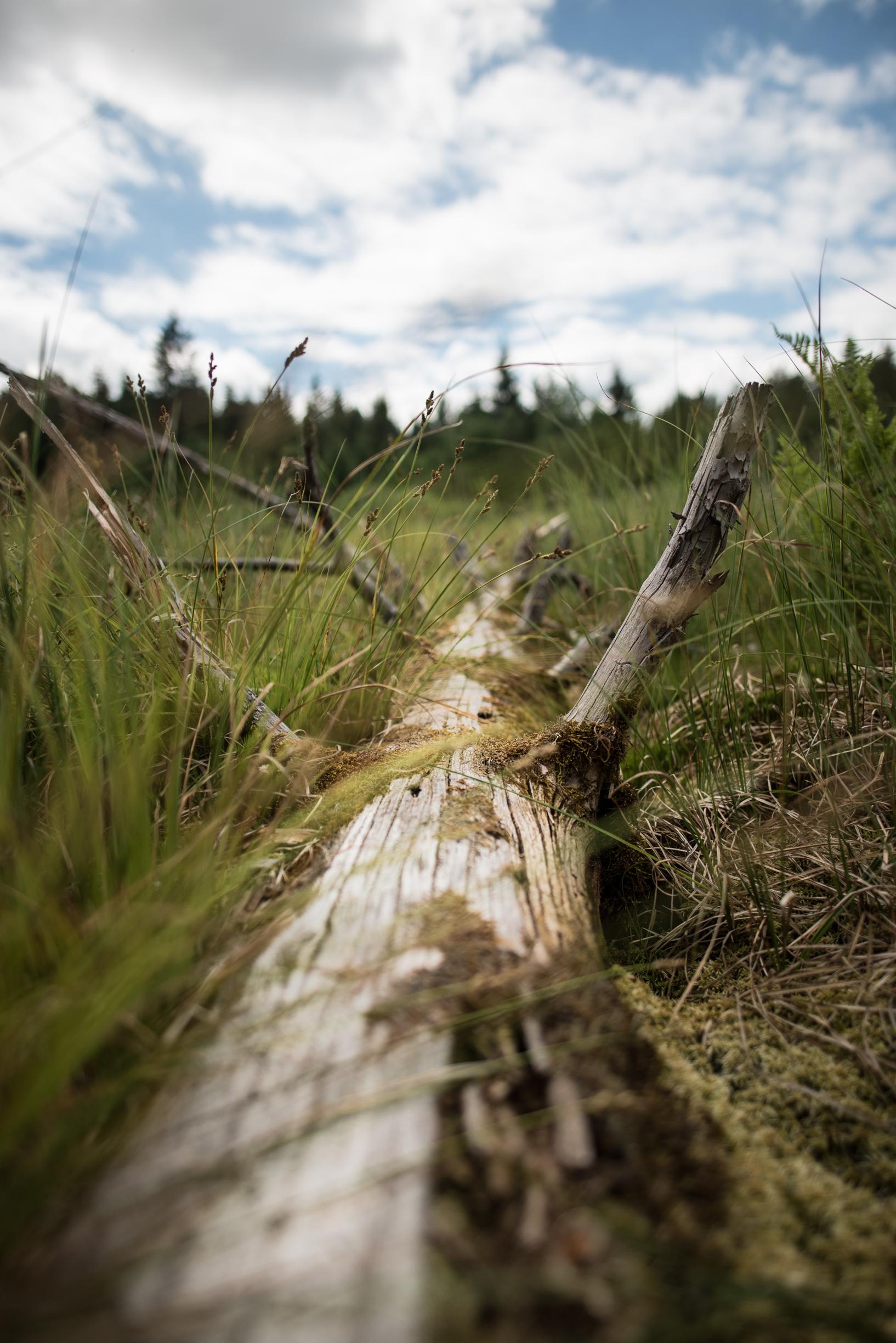 toter Baum im Jura