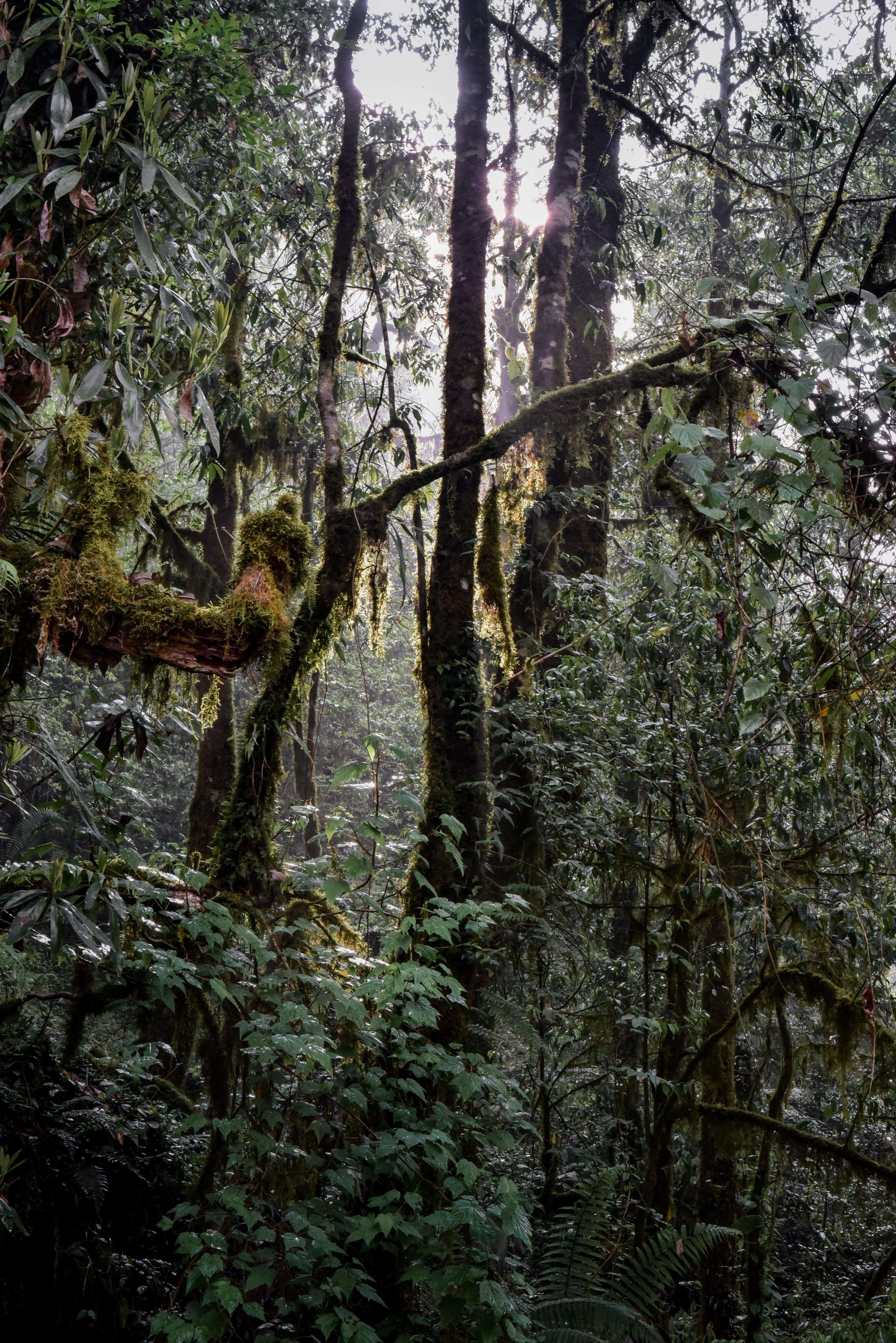 Urwald Nepal
