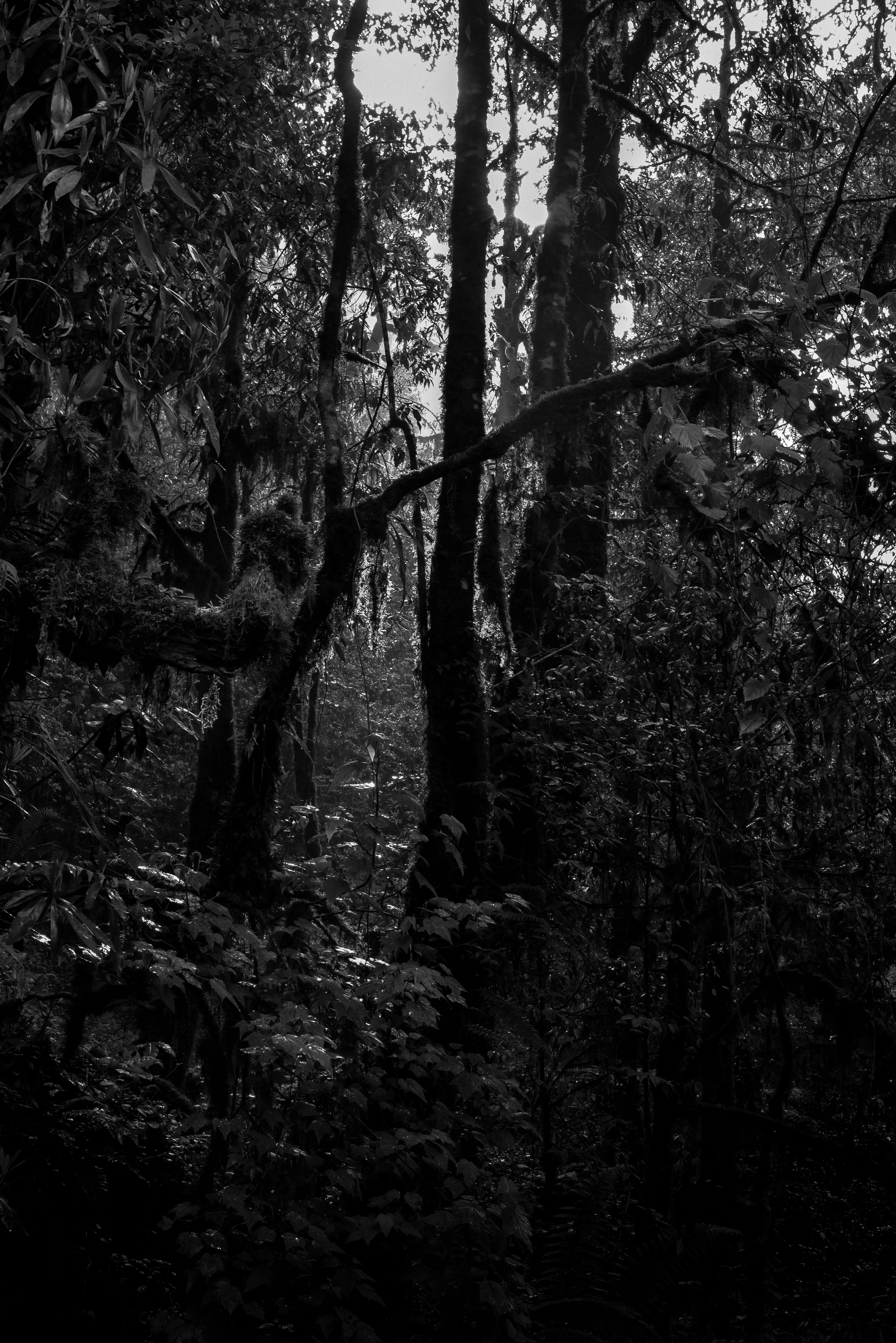 Urwald in Nepal