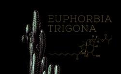 Pflanzen Shooting, Euphorbia Trigona