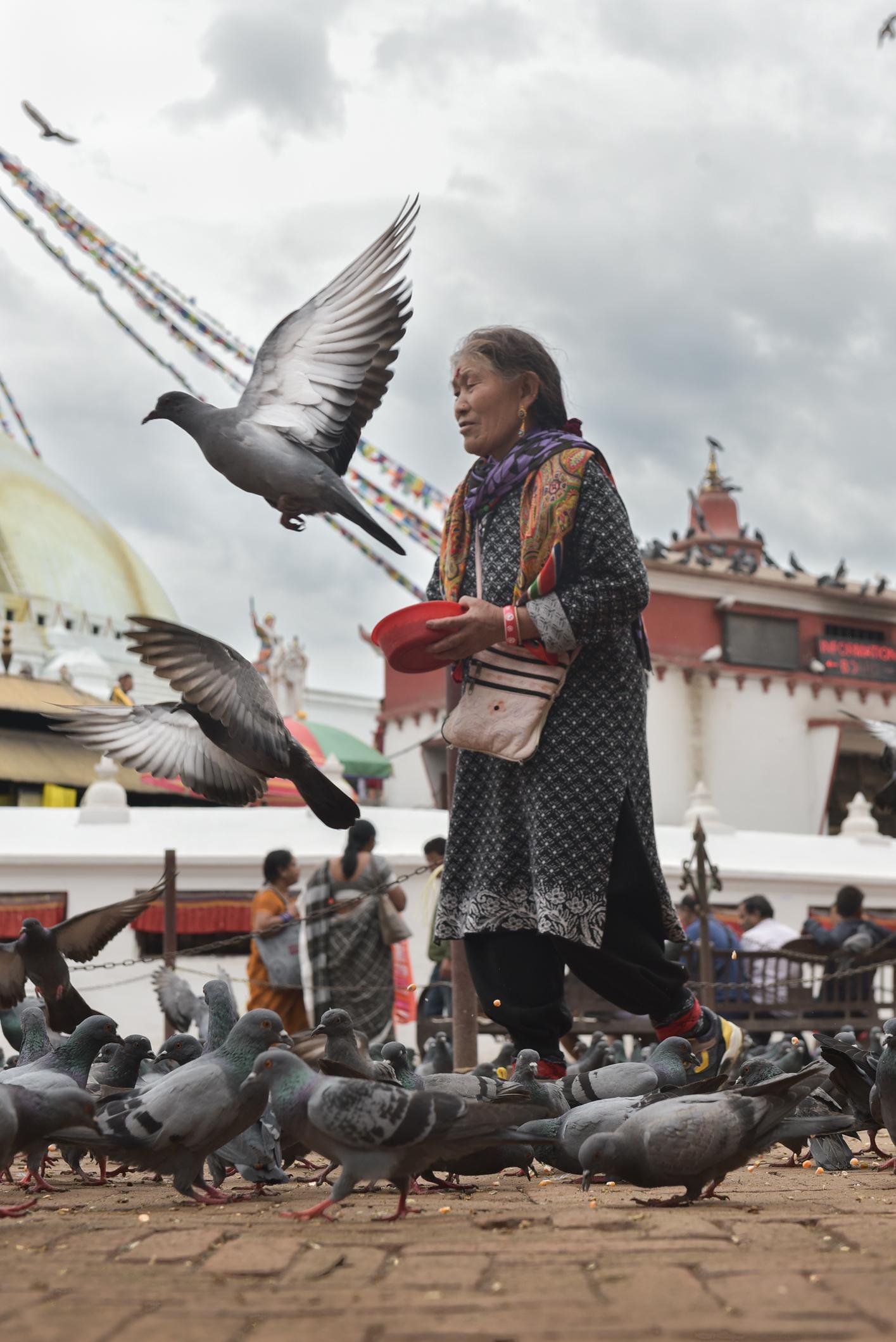 Frau mit Taube Nepal