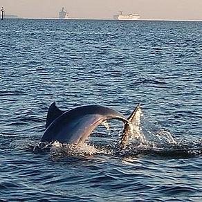 Dolphin Sightseeing.jpg