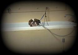 Bull Dog Bath