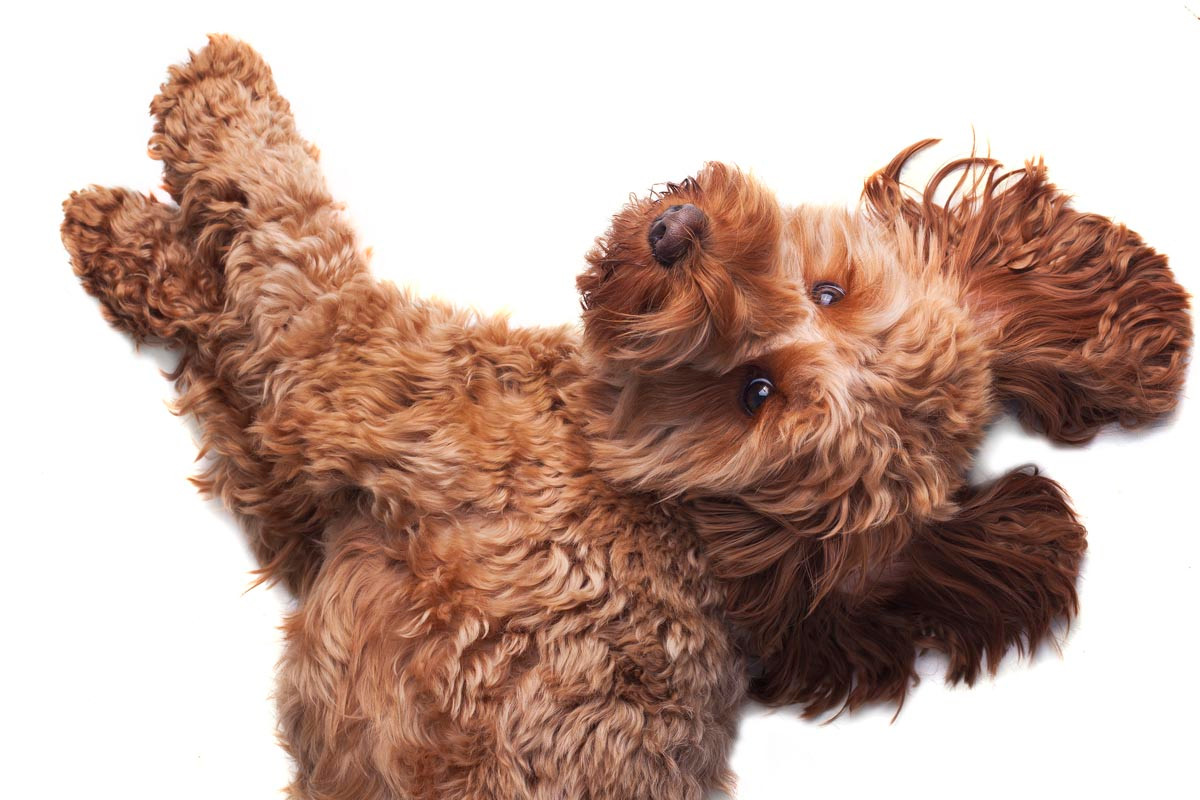 Sutton Coldfield pet photographer.jpg