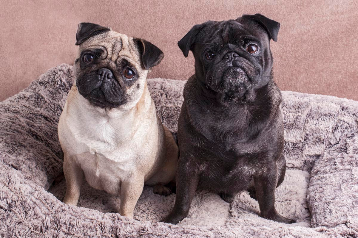 Sutton Coldfield pet photography.jpg