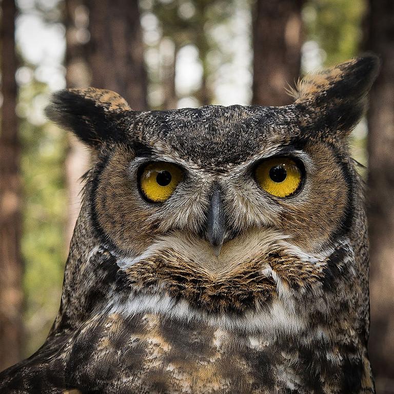 Owl Fest at Tryon Creek