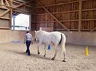 Outdoor-Anlass - Pferde als Lehrer und Feedbackgeber