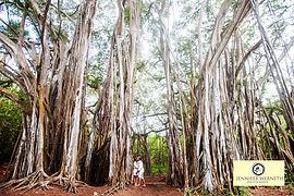 Maternity photographers in Maui - Oahu Hawaii