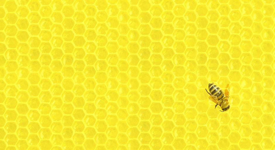 eb_bg_honeycomb_02.jpg