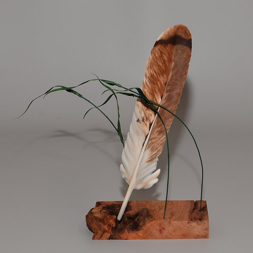 Red Tail Hawk suspended by canary grass on burled walnut