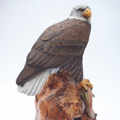 Third Size Bald Eagle