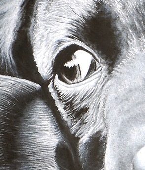 Dog_Eye.jpg