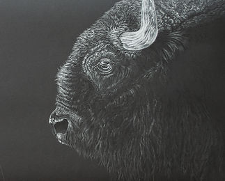 Bison_Profile