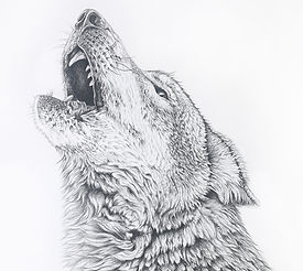 Wolf_Face
