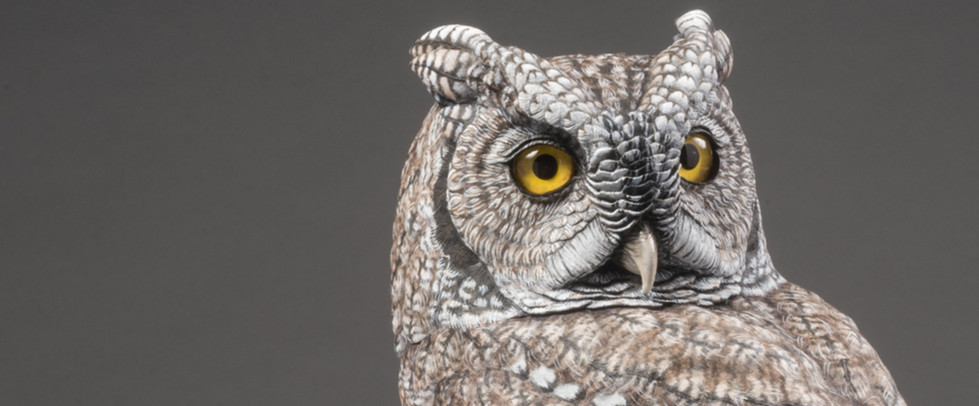 Screech Owl on Pine Branch