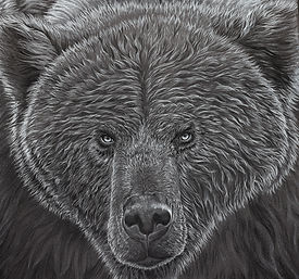 Grizzly_Drawing_Full