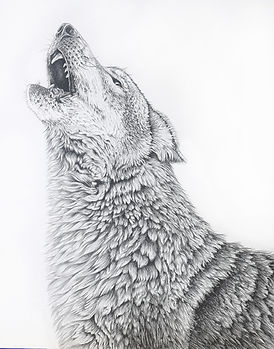 Wolf_Drawing